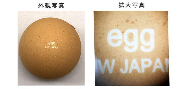 卵殻へのマーキング